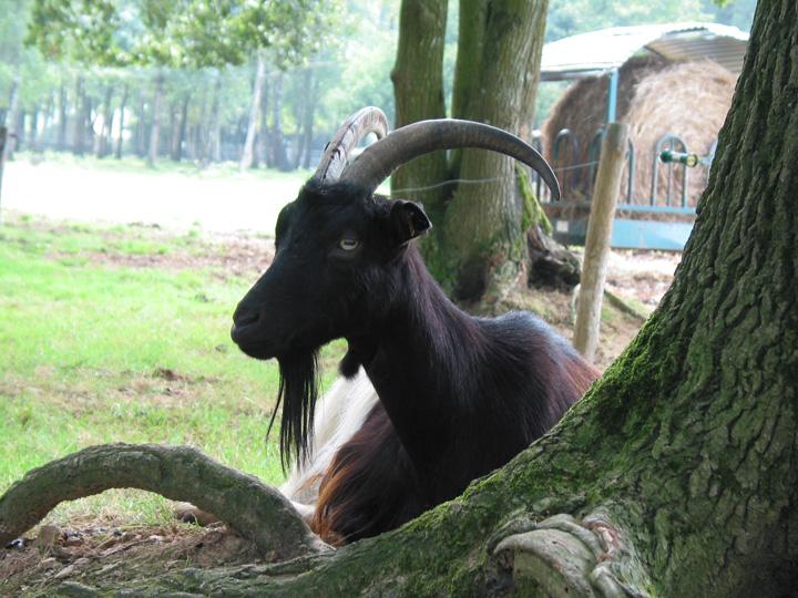 parc_animalier02