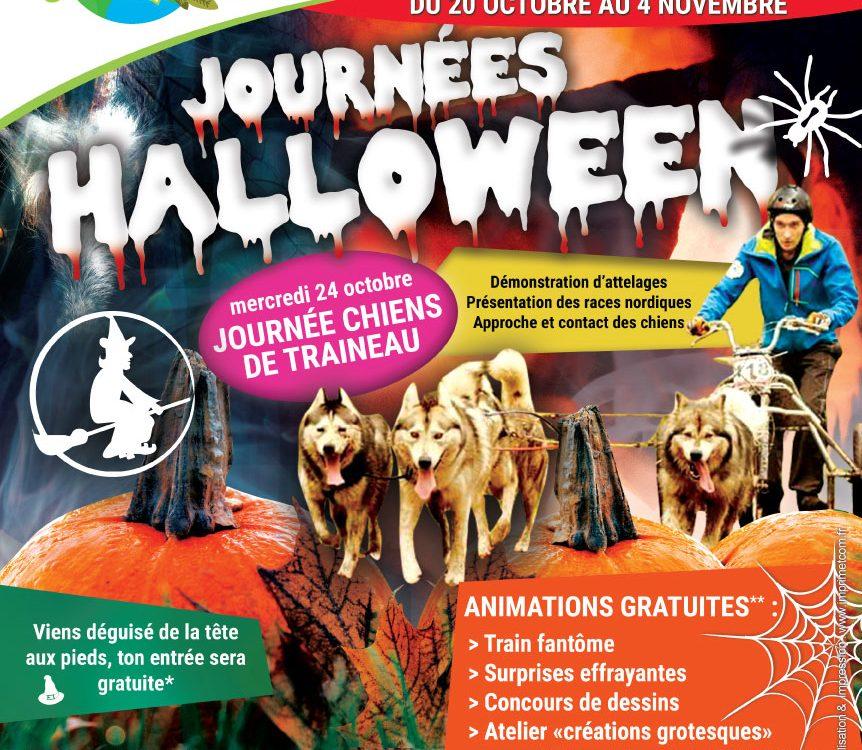 Affiche animation chiens de traîneau